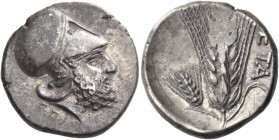 Metapontum. Nomos circa 340-330, AR 7.89 g. Head of Leucippus r., wearing Corinthian helmet; on neck-guard, S and below neck truncation, EΠI. Rev. MET...