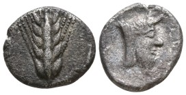 Lucania. Metapontion circa 440-430 BC. Diobol AR