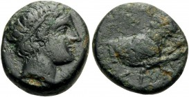 KINGS OF MACEDON. Pausanias, 395/4-393 BC. Hemiobol (Bronze, 15 mm, 3.52 g, 1 h), Aigai. Head of Apollo to right, wearing tainia. Rev. ΠAY-ΣΑΝ Forepar...