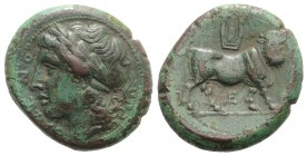 Northern Campania, Cales, c. 265-240 BC. Æ (21.5mm, 7.31g, 6h). Laureate head of Apollo l. R/ Man-headed bull standing r., head facing; kithara above,...