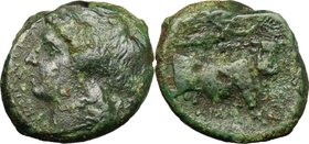 Greek Italy. Samnium, Southern Latium and Northern Campania, Aesernia. AE 21.5 mm, c. 263-240 BC. D/ Laureate head of Apollo left. R/ Man-faced bull w...