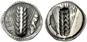 The M.L. Collection of Coins of Magna Graecia and Sicily   Metapontum  Nomos circa 530-500, AR 7.85 g. META Ear of barley; in r. field, grasshopper. ...