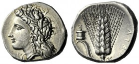 The M.L. Collection of Coins of Magna Graecia and Sicily   Metapontum  Nomos circa 330-290, AR 7.91 g. Head of Demeter l., wearing barley wreath; bel...