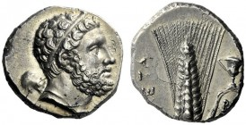 The M.L. Collection of Coins of Magna Graecia and Sicily   Metapontum  Nomos circa 290-280, AR 7.74 g. Head of Heracles r., hair bound with taenia ; ...