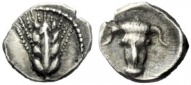 The J. FALM Collection: Miniature Masterpieces of Greek Coinage depicting Animals   Lucania, Metapontum  Obol circa 440-430, AR 0.36 g. Ear of barley...