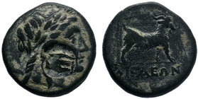 Aeolis. Aigai circa 300-200 BC. AE Bronze.Head of Apollo right / AIΓAEΩN, goat standing right.SNG Cop. 10; SNG von Aulock 1596.  Condition: Very Fine ...