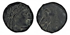 NORTHERN LEVANTE. Seleucids. Achaios, (220 - 214) BC.  Chr. AE Mzst. Sardis. Obv .: head of Apollo with laurel wreath n. R. Rev .: ΒΑΣΙΛΕΩΣ eagle with...